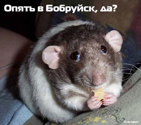 Опять в Бобруйск, да?