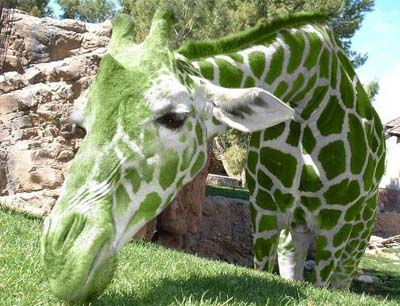 зелёный жираф