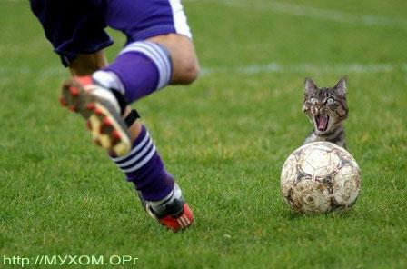 Кот за мячём
