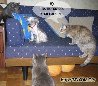 3 Кота и собака