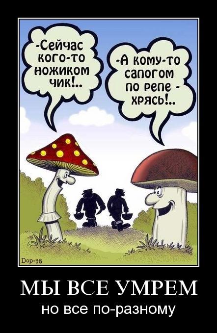 Демотиватор: Мухомор и гриб