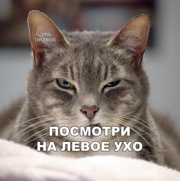 Посмотри на левое ухо кота