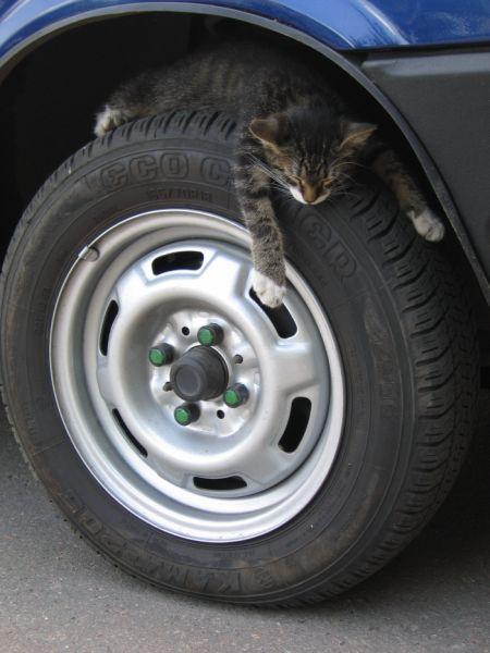 Кот на колесе