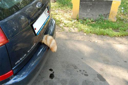 кот в багажнике