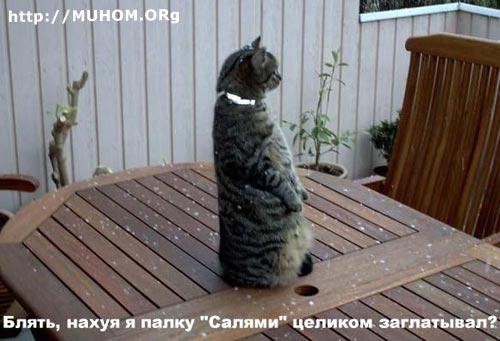 Кот и салями