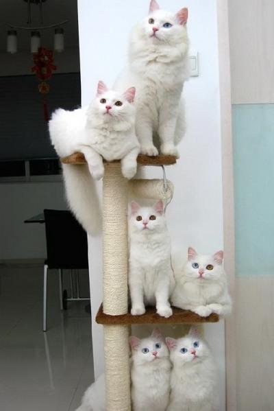 Коты на жердочках
