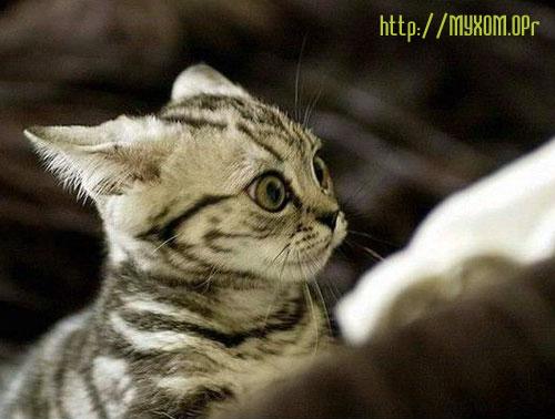 Кот с выпученными глазами