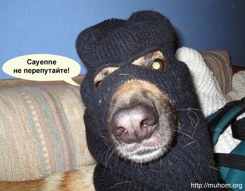 Каен Cayenne не перепутайте!