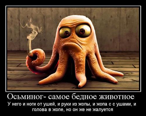 http://muhom.org/wp-content/uploads/2011/01/octopus.jpg