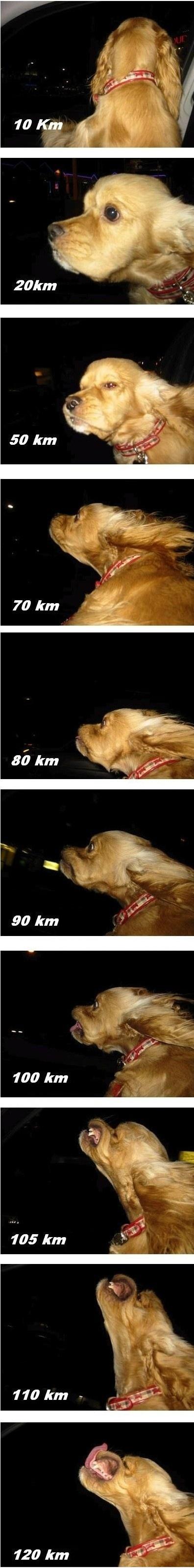 Собака на скорости от 10 до 120 км/ч.