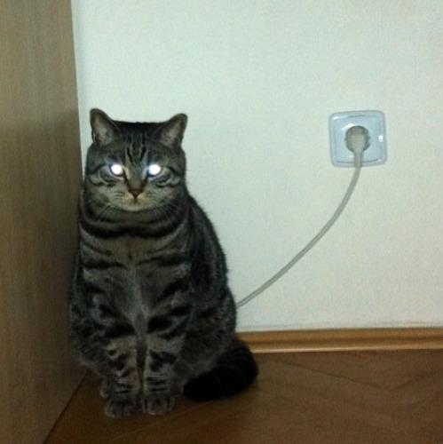 Кот от электрической розетки