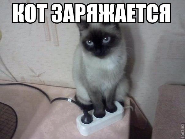 Кот на зарядке, кот заряжается