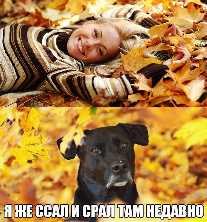 Собака: я же ссал и срал там недавно