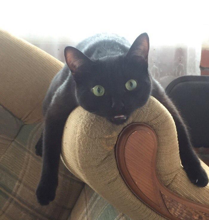Кот после кошачей мяты